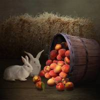 Fruit of the Rabbit by I.M. Spadecaller