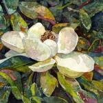 """Magnolia Blossom"" by HaileyWatermedia"
