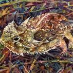 """Horned Toad"" by HaileyWatermedia"