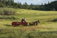 Old Fashioned Horse Drawn Wagon