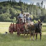 """""""Horse Drawn Wagon"""" by SederquistPhotography"""