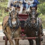 """""""Wagon and Draft Horses"""" by SederquistPhotography"""