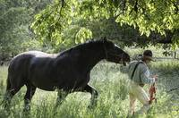 Dave Souza Leading Percheron