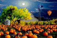 Moonlit Pumpkin Patch
