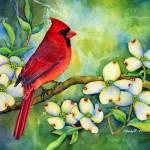 """Cardinal on Dogwood"" by HaileyWatermedia"