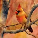 """Northern Cardinal II"" by HaileyWatermedia"