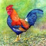 """Rooster I"" by HaileyWatermedia"