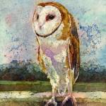 """Barn Owl"" by HaileyWatermedia"