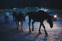 Light behind horses