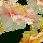 """""""Floating Bouquet 31"""" by LyndaLehmann"""