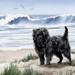 """Affenpinscher At The Beach"" by k9artgallery"
