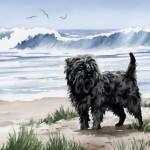 """""""Affenpinscher At The Beach"""" by k9artgallery"""