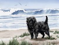 Affenpinscher At The Beach