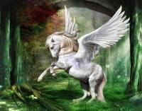 White Pony Pegasus