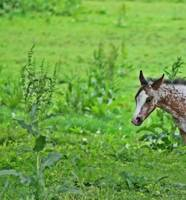 New Foal Peeping