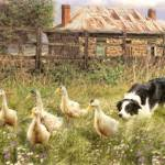 """Farmyard Fun"" by TrudiSimmonds"