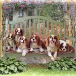 """Cavalier Cottage"" by TrudiSimmonds"