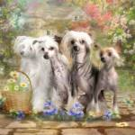 """""""Chinese Crested"""" by TrudiSimmonds"""