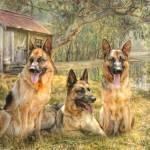 """German Shepherd Trio"" by TrudiSimmonds"