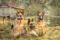 German Shepherd Trio