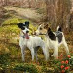 """""""Foxy Fetch"""" by TrudiSimmonds"""