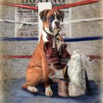 """""""The Boxer"""" by TrudiSimmonds"""