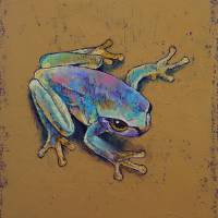 Rainforest Tree Frog Art Prints & Posters by Michael Creese