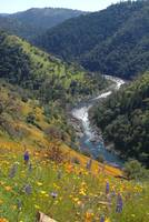 Poppies and American River Canyon