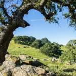"""""""Hill View"""" by goatlockerguns"""
