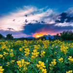 """""""goldenbanner_sunset"""" by DanBourque"""