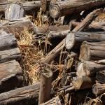 """Log Pile"" by rhamm"
