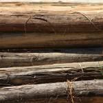 """Pile of Logs"" by rhamm"