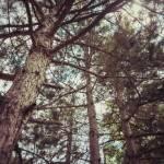 """The Pinewood"" by SalvatoreRussolillo"