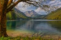 Vorderer Langbathsee - Framed by a Tree
