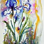 """Blue and White Bearded irises Watercolor"" by GinetteCallaway"