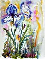 Blue and White Bearded irises Watercolor