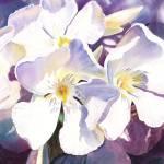 """White Oleander by Irina Sztukowski"" by IrinaSztukowski"