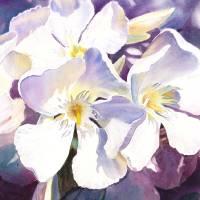 White Oleander by Irina Sztukowski Art Prints & Posters by Irina Sztukowski