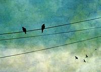 Two Birds On One Wire