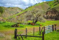 California's Cow Country