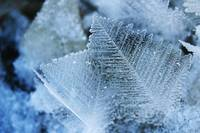Crystalline Leaves