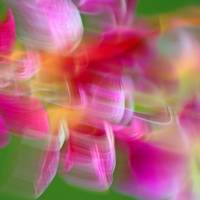 Orchid Abstract Square