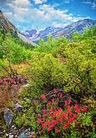 The Wildflowers of Lundy Canyon