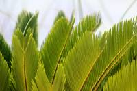 Palm Fronds #2 2016