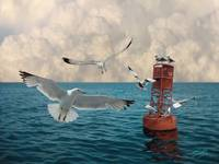 The Gulls at Buoy 22