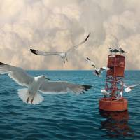 The Gulls at Buoy 22 by I.M. Spadecaller