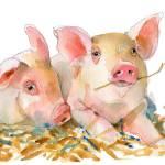 """Pig art | watercolor | farm animal art"" by schulmanart"