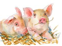 Pig art | watercolor | farm animal | Pig Passion