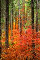 Color Filled Forest