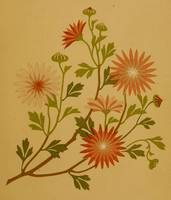 Vintage Pink and Red Wildflower Design